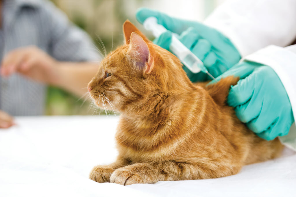 A Cat or Dog being vaccinated by a veterinarian - Animal Medical Center Frankfort Kentucky