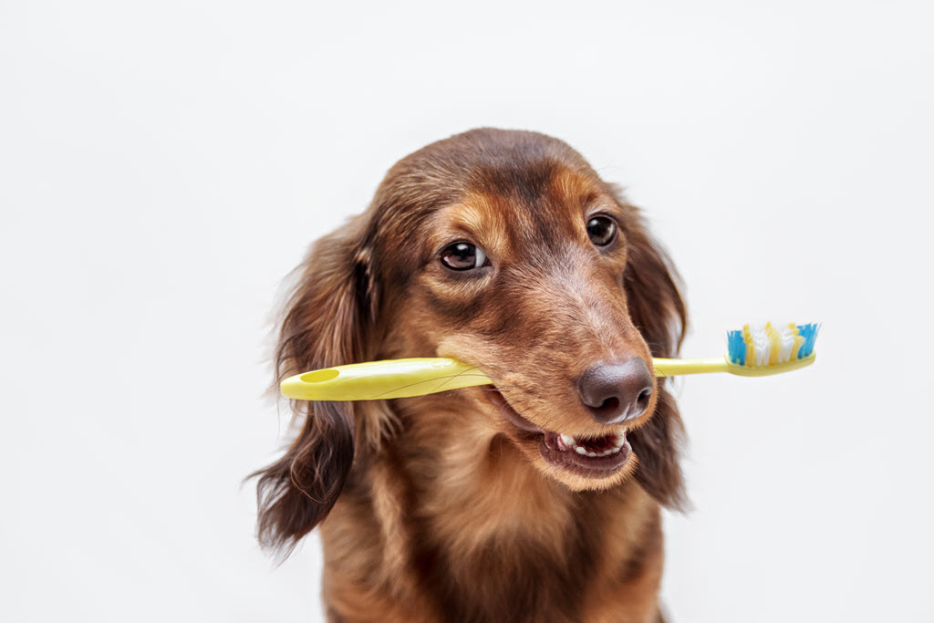 Pet Dental Care Veterninarian - Animal Medical Center Frankfort Kentucky