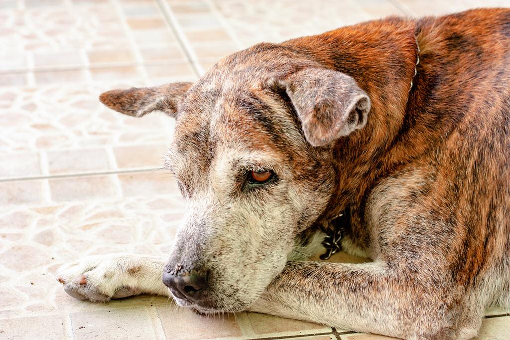Senior Elder Care for Dogs Cats Pets -Veterinarian - Animal Medical Center Frankfort Kentucky